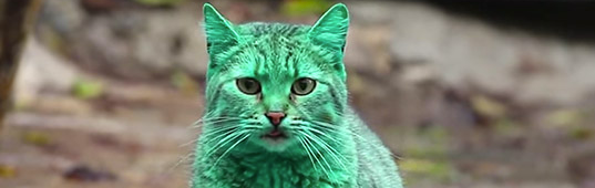 2014′s funniest stories, best of 2014, best stories of 2014, comedy, funniest stories of 2014, funniest stories of the year, funny green products, funny stories 2014, green cat, why is this cat green