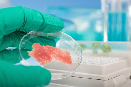 food safety, food scares, horse meat scandal, meat contamination, spectroscopy, pulsar, oxford instruments, IFR