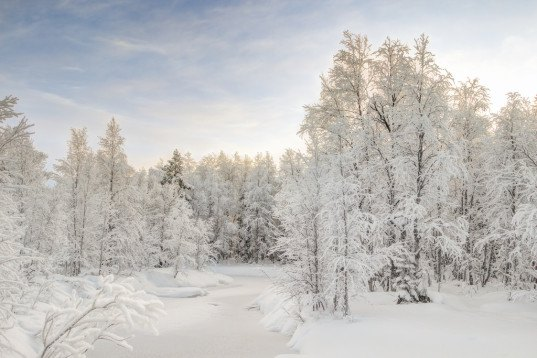 finland, snow, scandinavia, trees, norway spruce, climate change, global warming