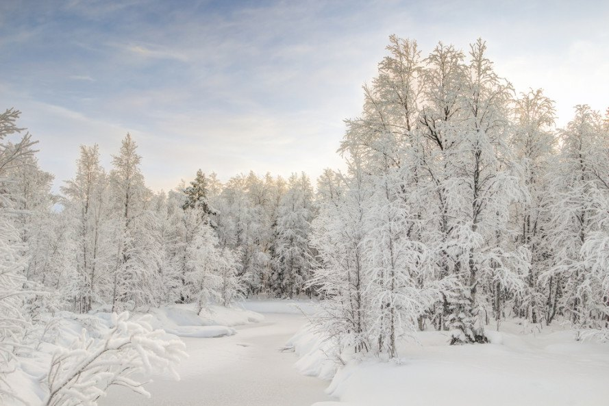 Climate Change Could Kill Scandinavia S Iconic Christmas Trees