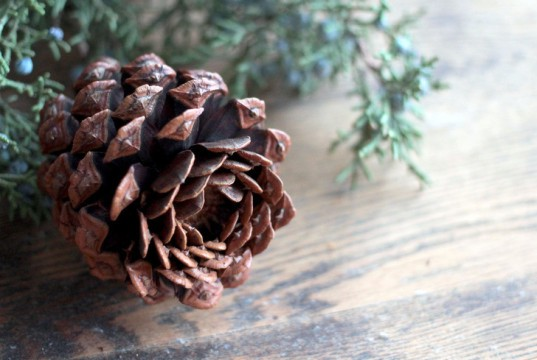 eco, green, holiday, christmas, lifestyle, decor, gift, candle, pinecone, craft, LED, local, goodwill, sustainable