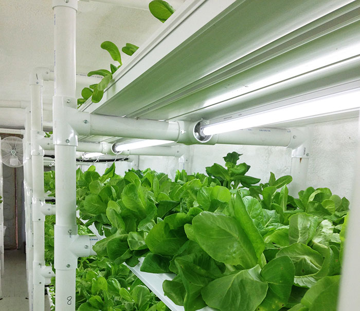 cropbox, container farming, mobile container farming, mobile farming, small farms, shipping container farm, container farm, sustainable farming
