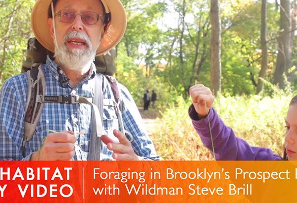 wildman steve brill, steve brill, wildman steve brill brooklyn, foraging, foraging in nyc, foraging in brooklyn, wildman steve brill, edible plants, urban foraging
