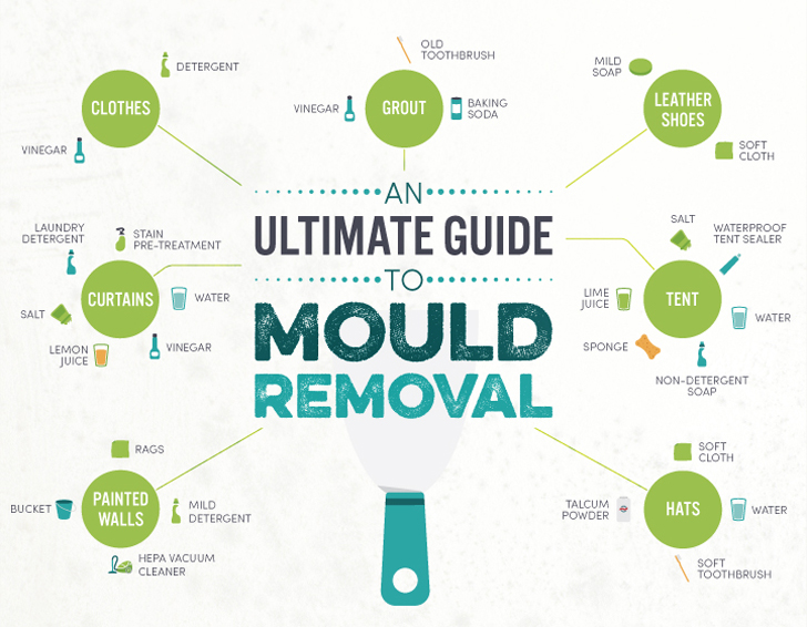 INFOGRAPHIC The Ultimate Guide To Mold Removal