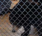 PETITION: Free Ricky the bear from her inhumane cage at an ice cream shop