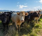 USDA may finally recommend eating less beef to save the environment