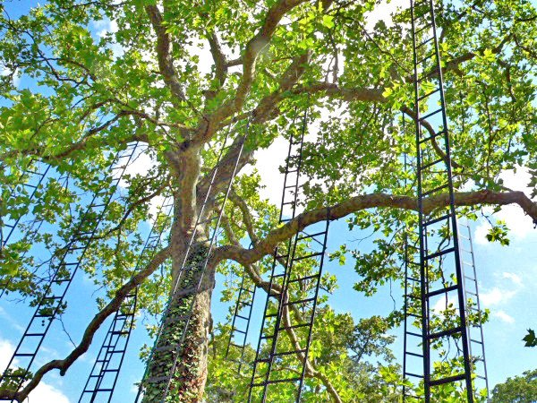 art, art installation, art display, trees, ladders, French, France, park, outdoor art, outdoor spaces, outdoors, L'arbre aux échelles, Francois Mechain