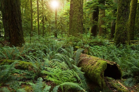 redwood forests, forests smaller, climate change and trees, trees getting smaller, trees growing smaller, california forests smaller, california forests dwindling, future forests smaller