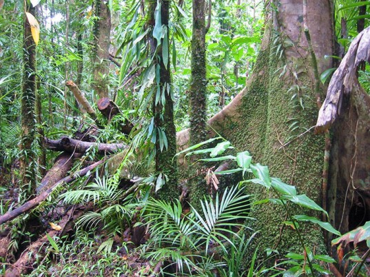 tropical forest co2 carbon dioxide absorption emissions carbon offset climate change