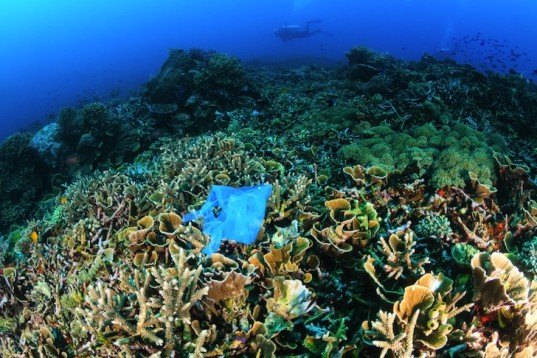coral reef, plastic ocean pollution, Richard Whitcombe, plastic pollution, reef pollution