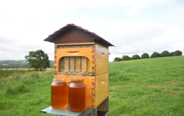 Flow Hive Lets Beekeepers Harvest Honey Without Disturbing The Bees