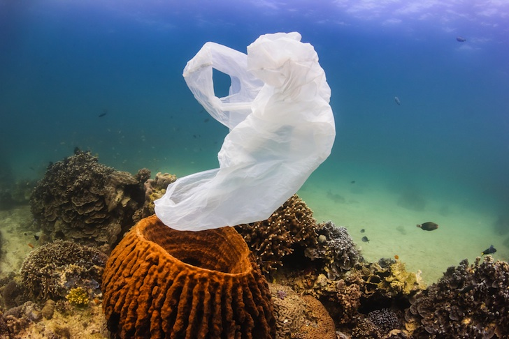 New study finds Great Barrier Reef corals eat plastic pollution