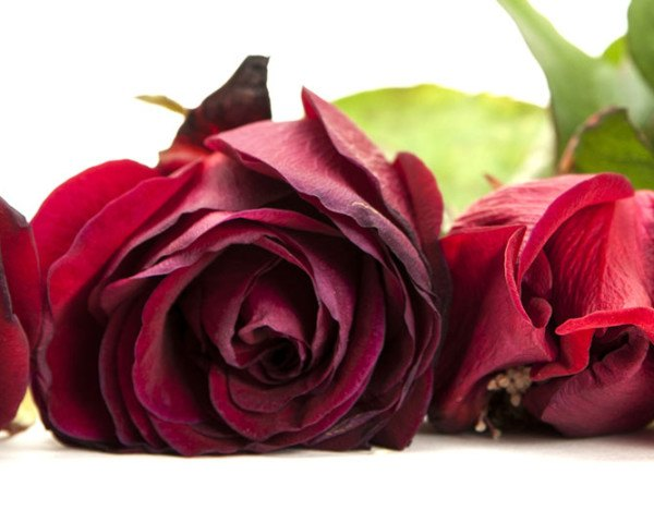 valentine's day, environmental impact, flowers, roses, crops, CO2, carbon dioxide, red roses, carbon impact roses, environmental impact roses, carbon footprint, flowers,