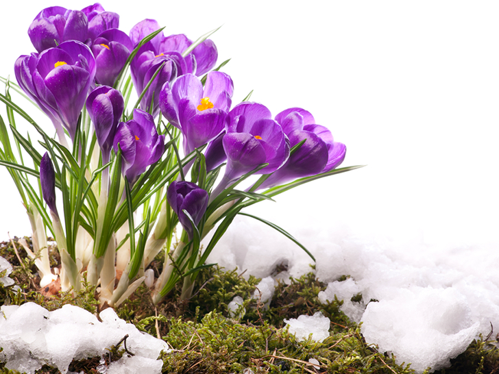 Experts say more snow will lead to lush spring gardens inhabitat experts say more snow often leads to prettier spring gardens mightylinksfo
