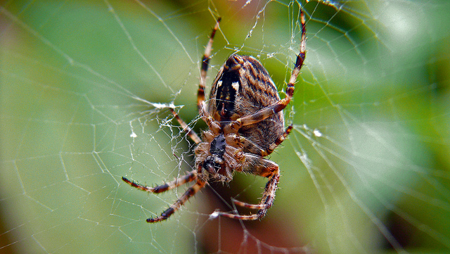 Spider Web Stock Images  Download 36584 Royalty Free Photos