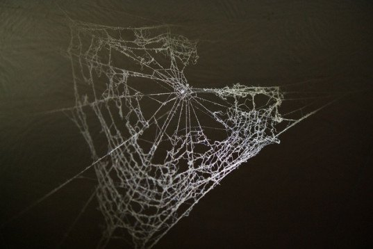 spider, spider silk, regenerative medicine, super strong silk, genetically modified insects, universidad politecnia de madrid, madrid, spain,