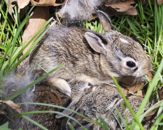 Spring S Baby Animals Are Easy Prey For Outdoor Pets Help