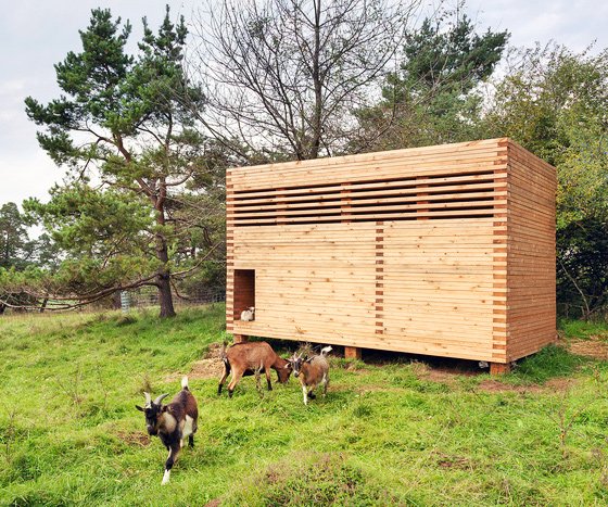 Architect Builds Tiny Timber Barn For Adorable Pygmy Goats In Bavaria