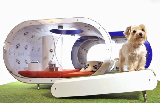 samsung, dog, doghouse, dream doghouse, crufts, pet accessories, pet health, treadmill