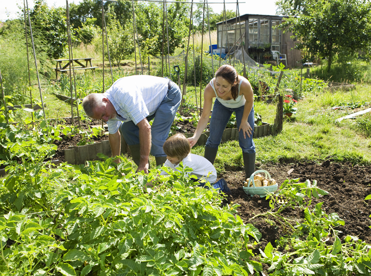 Leicestershire Master Gardeners offer free food-growing ...