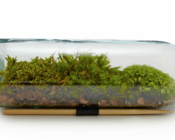 Terrarium, diy, earth day diy, earth day, do it yourself, crafts, earth day crafts, make it yourself, green design, eco design, sustainable design, recycled design, recycled crafts