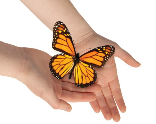 Holding Monarch Butterfly