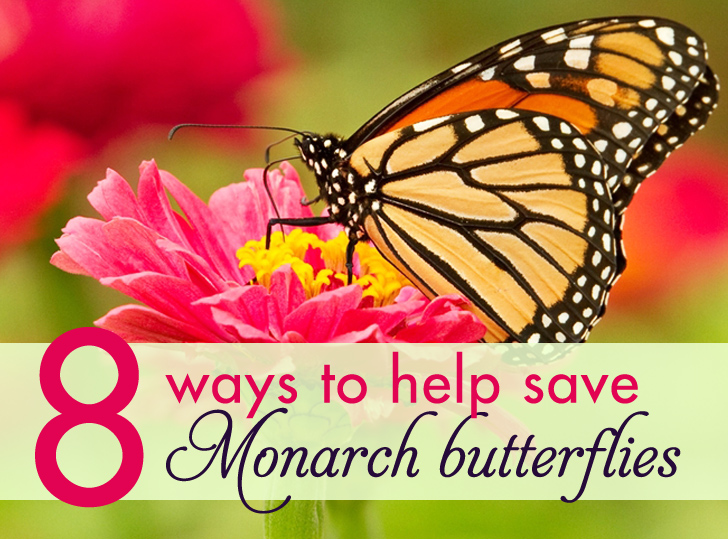 Elegant 8 Ways That You Can Help Save Monarch Butterflies. Design