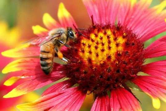 Bees are addicted to the nicotine in neonicotinoid pesticides, and it's killing them