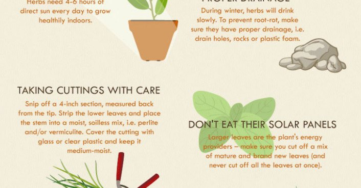 INFOGRAPHIC: How to successfully grow an herb garden