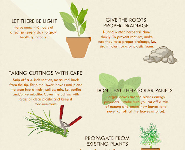 Indoor Herb Garden Winter Infographic how to successfully grow an herb garden inhabitat design workwithnaturefo