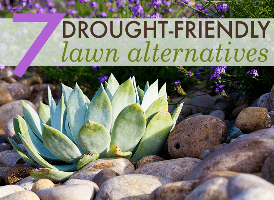 7 Beautiful Drought Friendly Lawn Alternatives Inhabitat