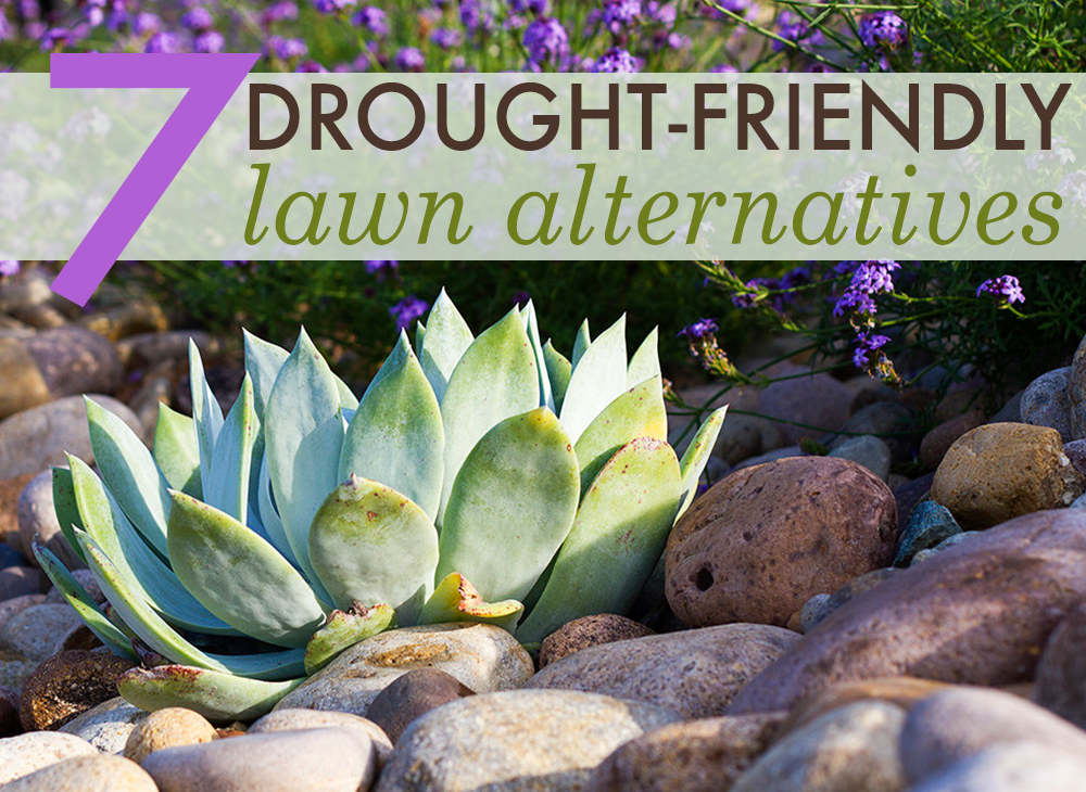 7 beautiful drought-friendly lawn alternatives