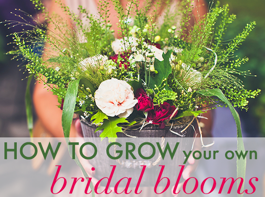 The Green Building Wedding Cost | A Complete Guide To Growing Your Own Bridal Blooms Inhabitat