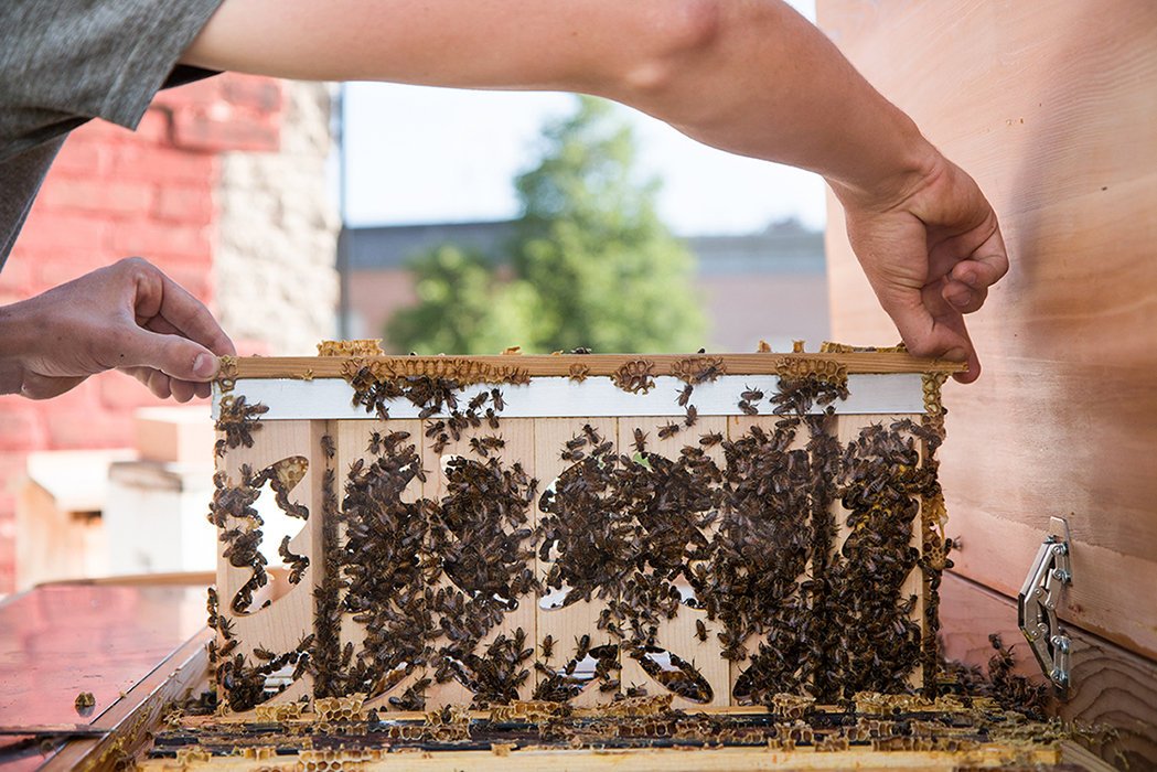 Project B Connects Urban Beekeeping With The Needs Of Restaurants