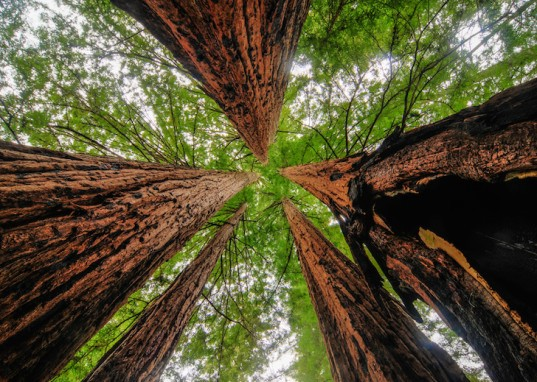 deforestation, deforestation issues, sustainable wood, fsc-certified wood, managed forests, global deforestation, Bordercraft, how sustainable is wood?, Forest Stewardship Council