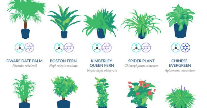 infographic top 18 houseplants for purifying the air you breathe according to nasa inhabitat green design innovation architecture green building - House Plants