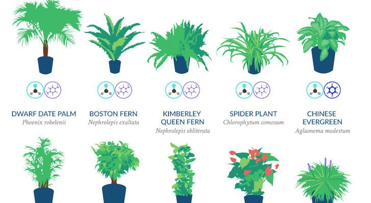 INFOGRAPHIC: Top 18 houseplants for purifying the air you ... on