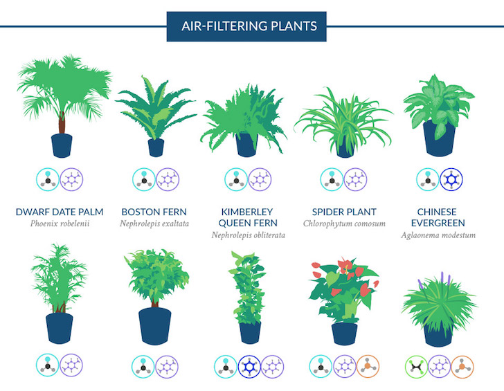 infographic top 18 houseplants for purifying the air you breathe according to nasa inhabitat green design innovation architecture green building - Identifying Common House Plants