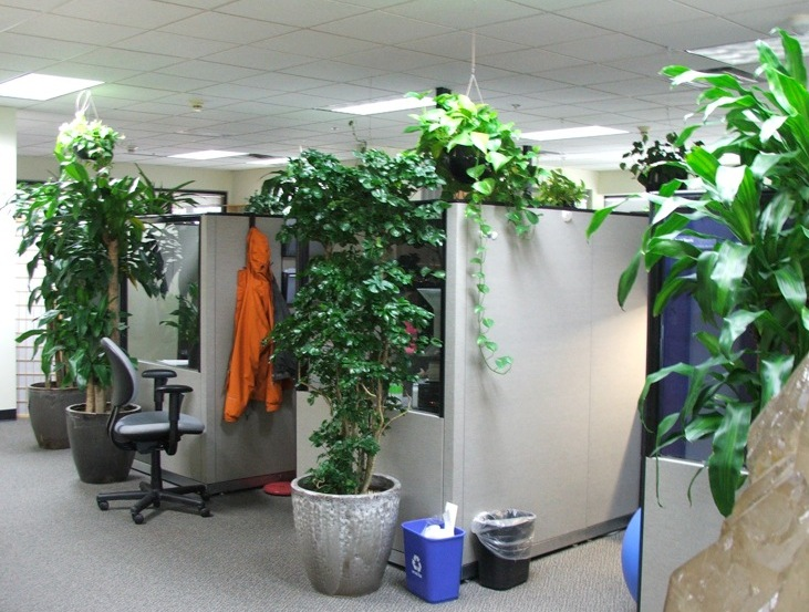 9 low maintenance plants for the office inhabitat for Low water indoor plants