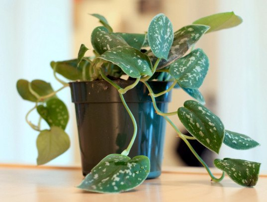 plants, office, garden, green, clean air, indoor, gardening