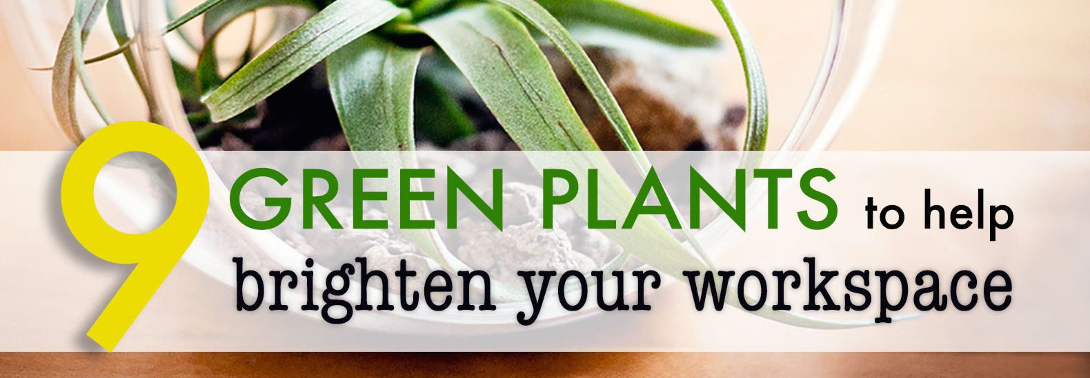 9 low maintenance plants for the office inhabitat green design