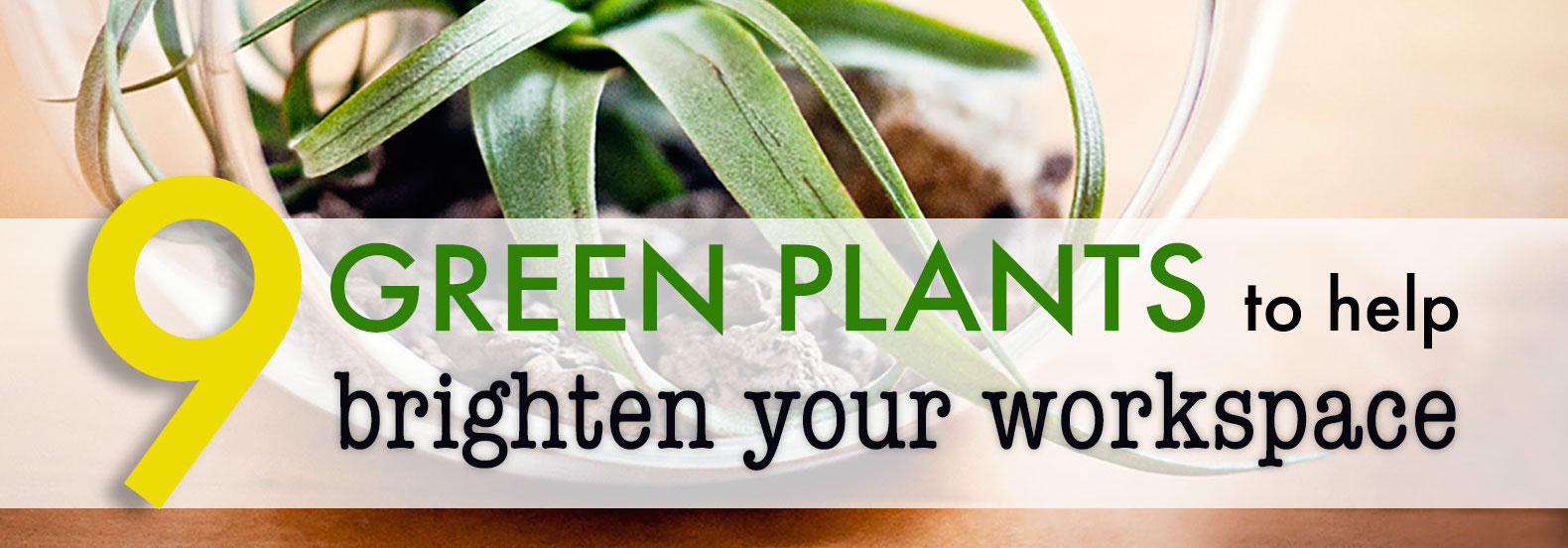 9 low maintenance plants for the office 9 low maintenance for Cheap low maintenance plants