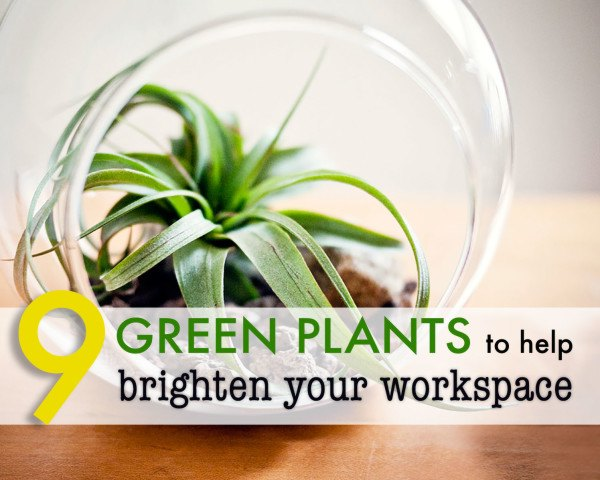 Superieur 9 Low Maintenance Plants For The Office | Inhabitat   Green Design,  Innovation, Architecture, Green Building