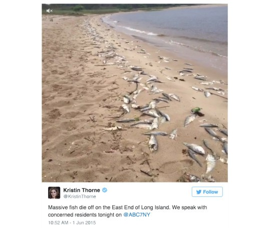 Thousands of dead fish wash ashore in long island 39 s for Bunker up fishing