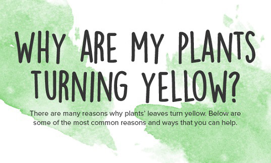 Infographic Why Are My Plants Turning Yellow Inhabitat