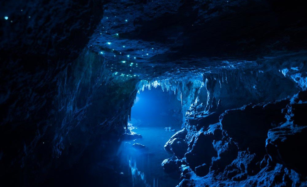 Breathtaking Images Capture The Magical Shine Of Glowworms