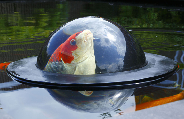 Floating Fish Dome lets fish swim above the surface of water