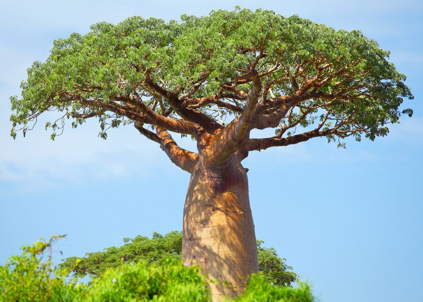 Can This Tree Provide Financial Security For 10 Million