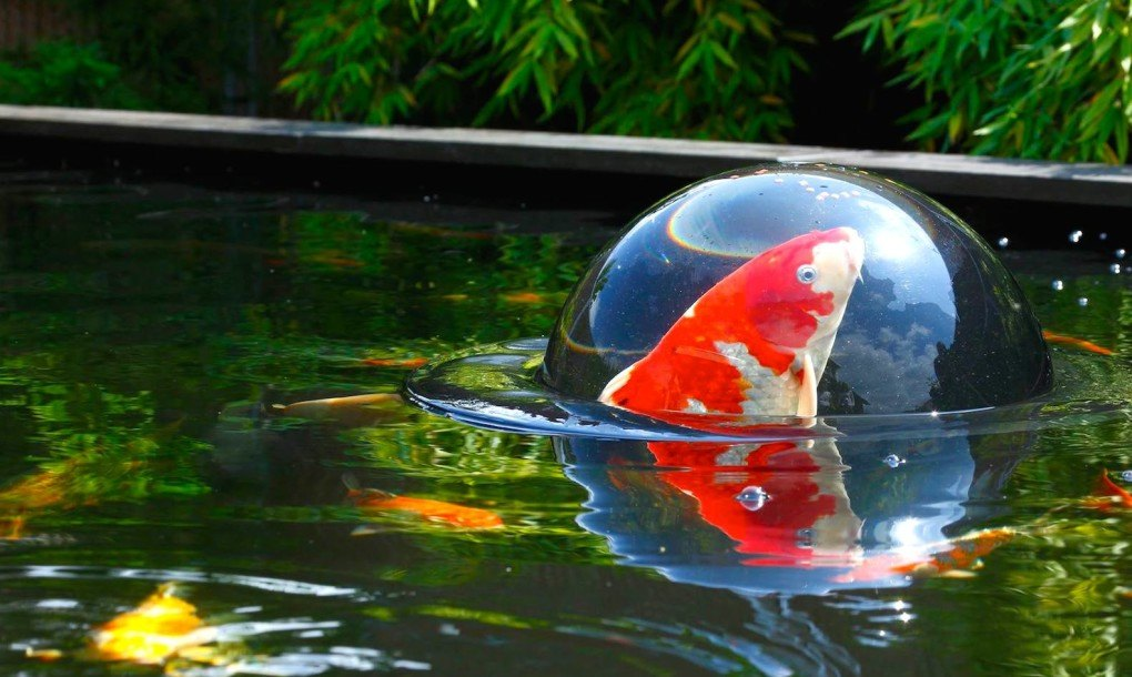 Floating Fish Dome Lets Fish Swim Above The Surface Of