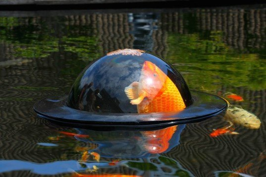Floating fish dome lets fish swim above the surface of water inhabitat green design Green fish pond water